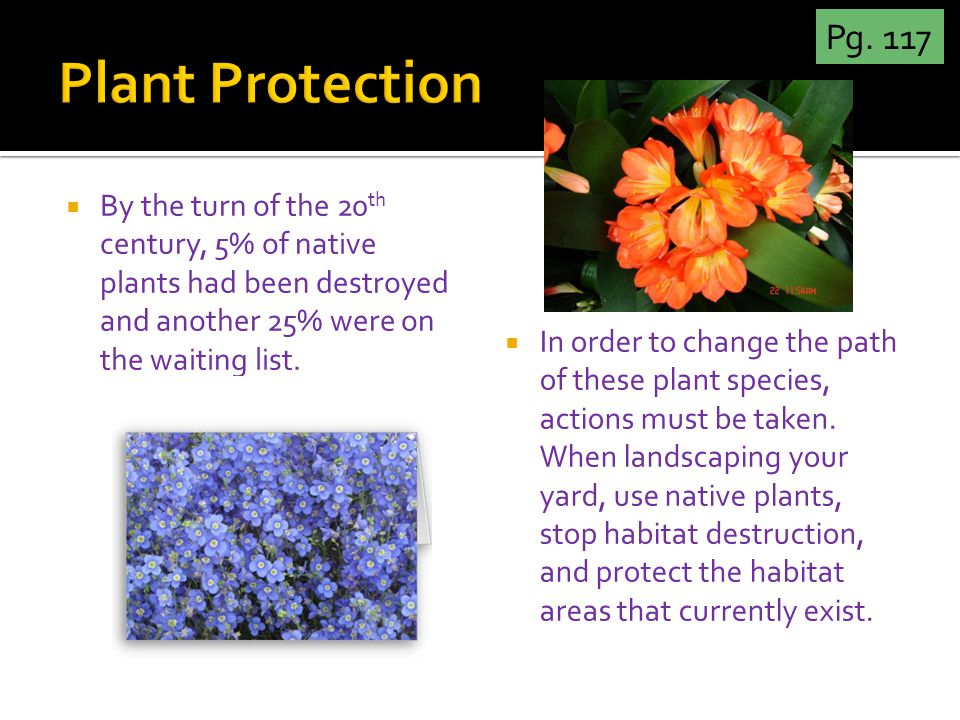  By the turn of the 20 th century, 5% of native plants had been destroyed and another 25% were on the waiting list.