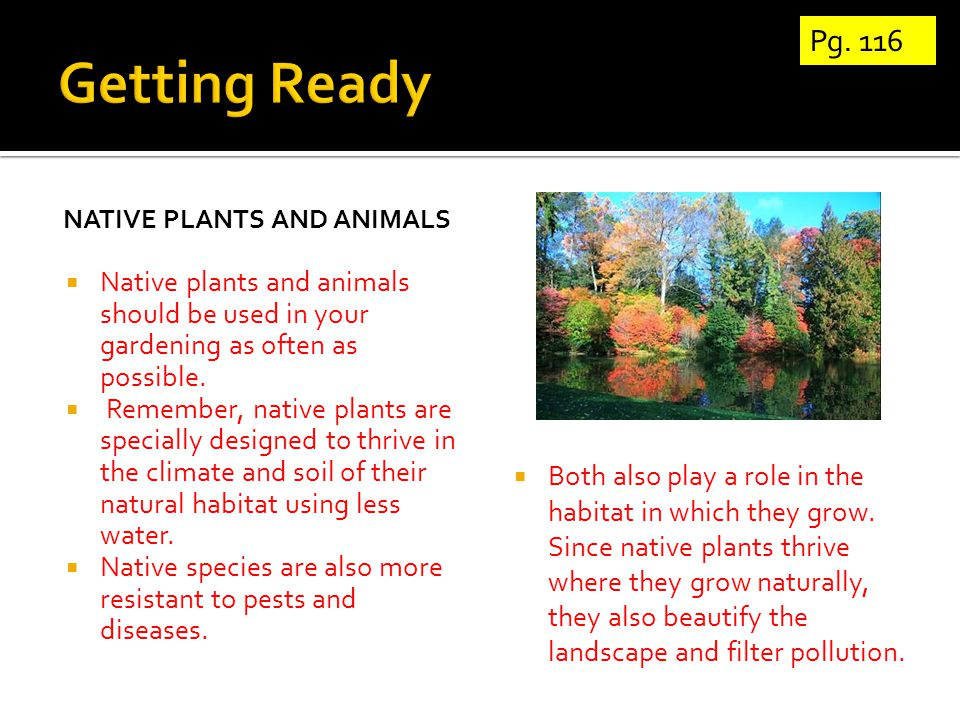 NATIVE PLANTS AND ANIMALS  Native plants and animals should be used in your gardening as often as possible.