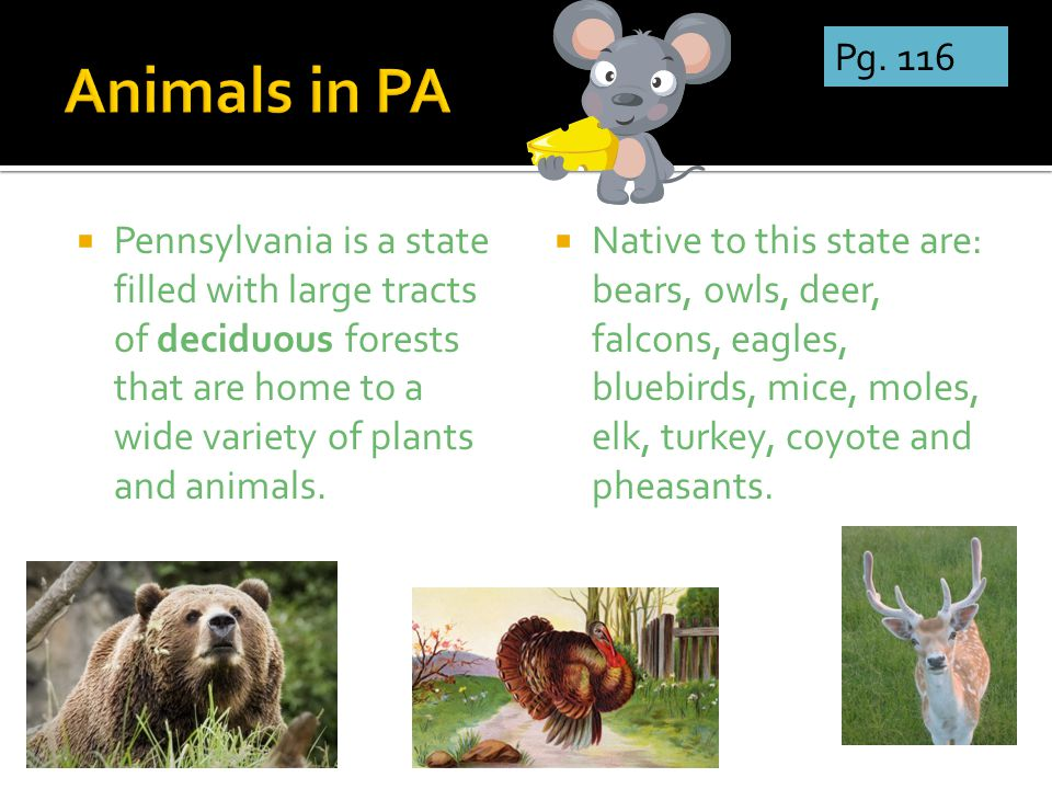  Pennsylvania is a state filled with large tracts of deciduous forests that are home to a wide variety of plants and animals.