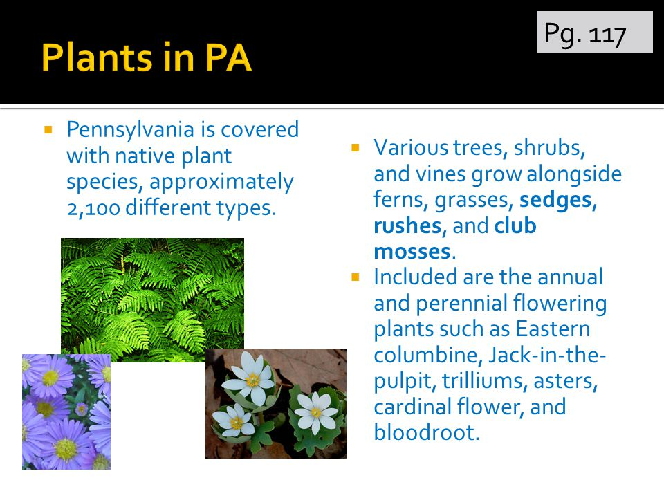  Pennsylvania is covered with native plant species, approximately 2,100 different types.