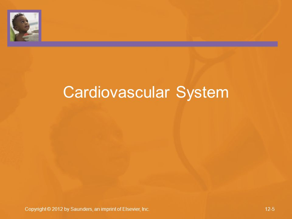 Copyright © 2012 by Saunders, an imprint of Elsevier, Inc. Cardiovascular System 12-5
