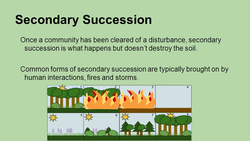 Secondary Succession Once a community has been cleared of a disturbance, secondary succession is what happens but doesn't destroy the soil.