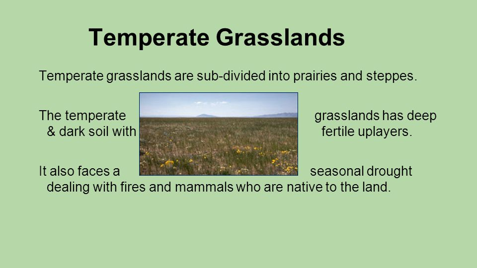 Temperate Grasslands Temperate grasslands are sub-divided into prairies and steppes. The temperate grasslands has deep & dark soil with fertile uplaye