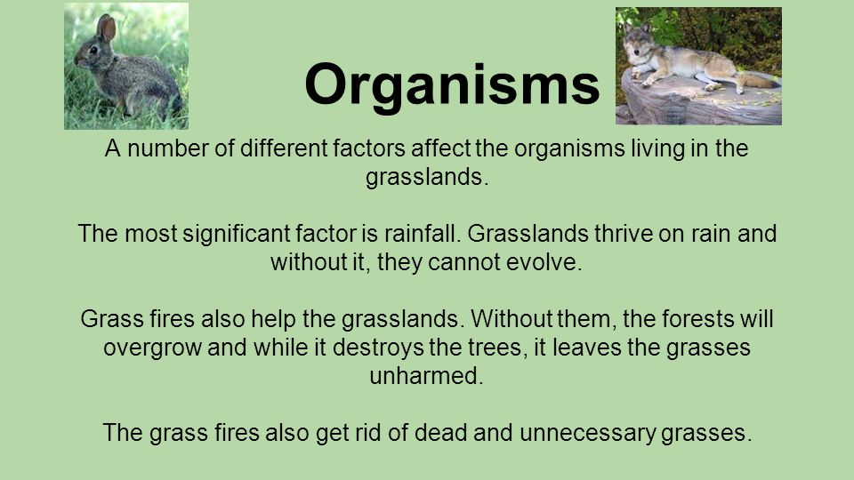 ●Although the amount of rain is important to grassland ecosystems, the time when it rains is also very important.
