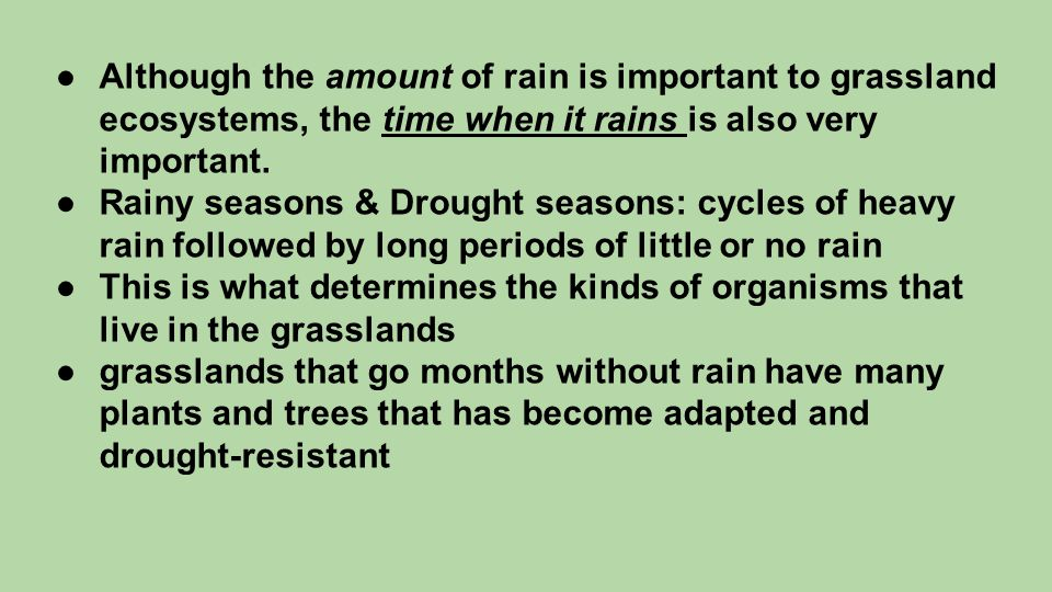 ●Although the amount of rain is important to grassland ecosystems, the time when it rains is also very important. ●Rainy seasons & Drought seasons: cy
