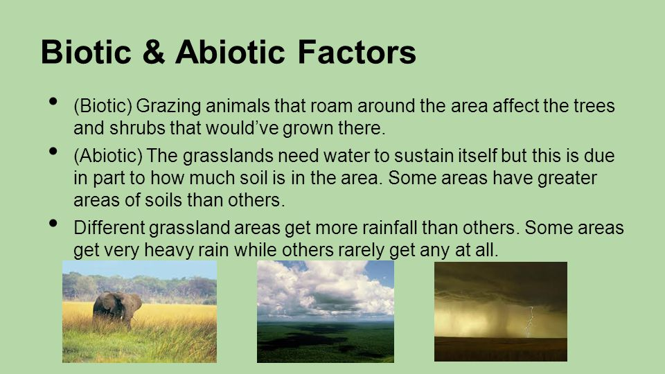 Biotic & Abiotic Factors (Biotic) Grazing animals that roam around the area affect the trees and shrubs that would've grown there. (Abiotic) The grass