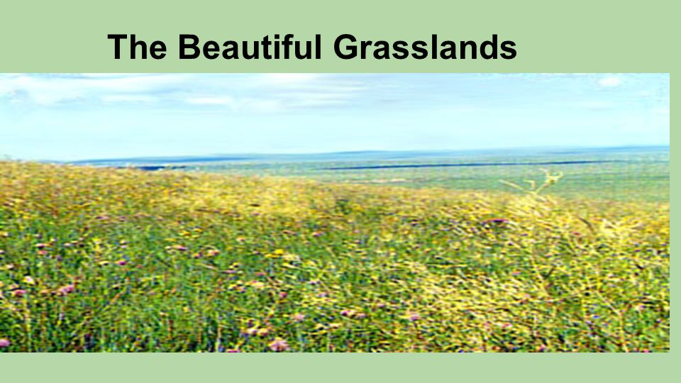 The Beautiful Grasslands