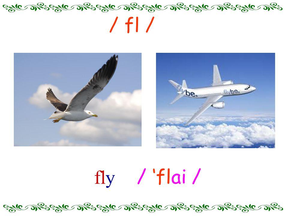 / 'flai / fly / fl /