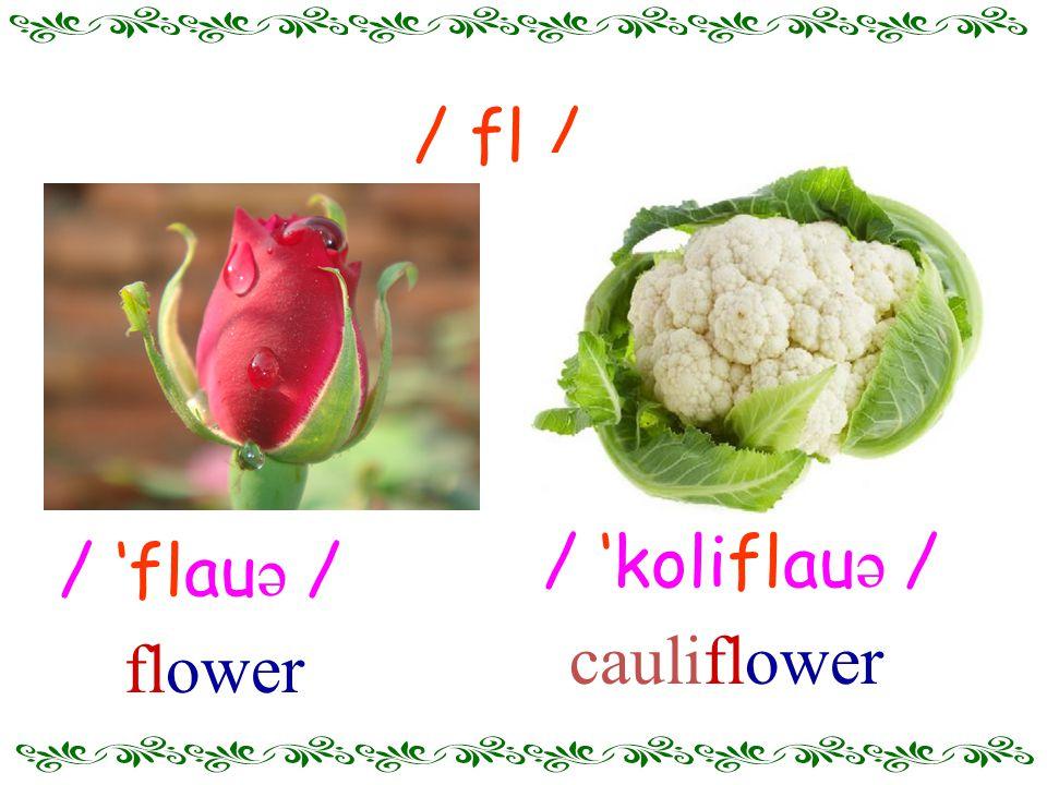 / 'flau ə / flower / fl / / 'koliflau ə / cauliflower