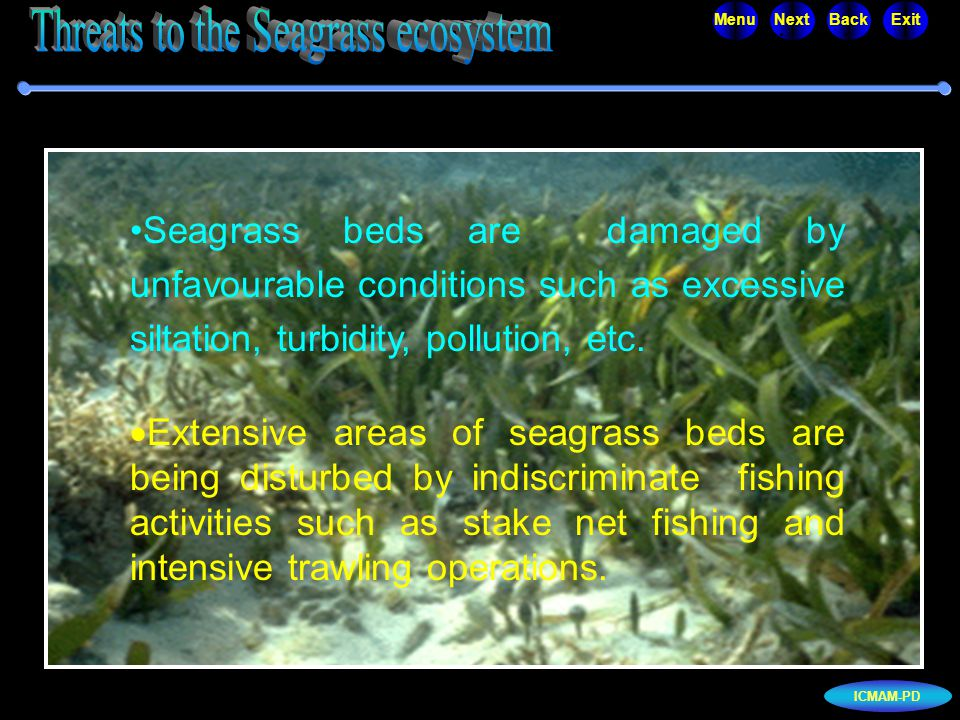 ICMAM-PD MenuNextBackExit Seagrass beds are damaged by unfavourable conditions such as excessive siltation, turbidity, pollution, etc.  Extensive are