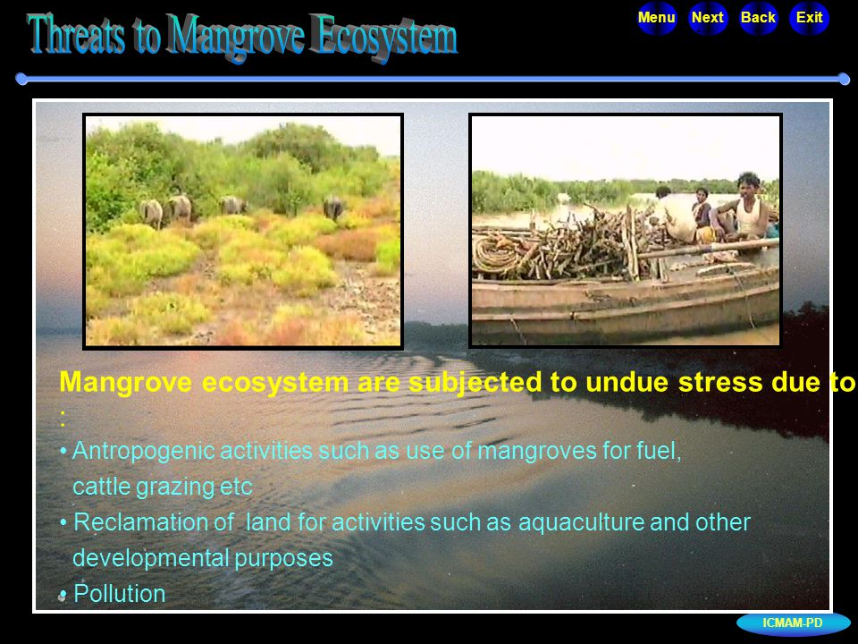 ICMAM-PD MenuNextBackExit Mangrove ecosystem are subjected to undue stress due to : Antropogenic activities such as use of mangroves for fuel, cattle grazing etc Reclamation of land for activities such as aquaculture and other developmental purposes Pollution...
