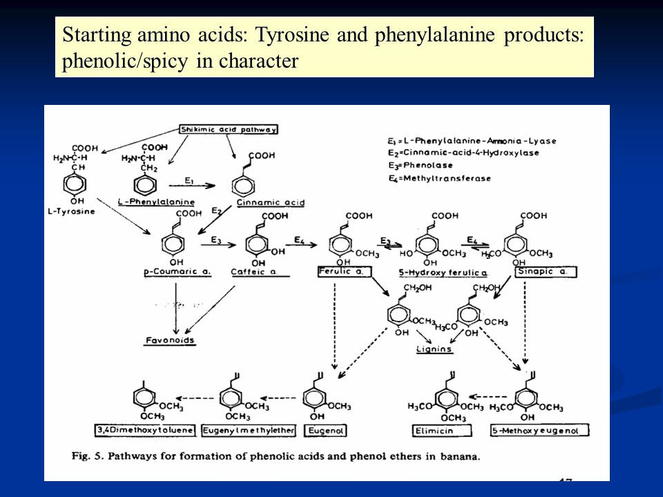 Starting amino acids: Tyrosine and phenylalanine products: phenolic/spicy in character