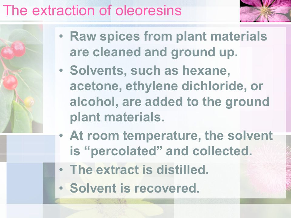 The extraction of oleoresins Raw spices from plant materials are cleaned and ground up.
