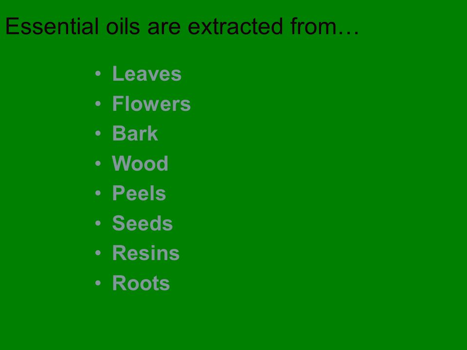 Essential oils are extracted from… Leaves Flowers Bark Wood Peels Seeds Resins Roots