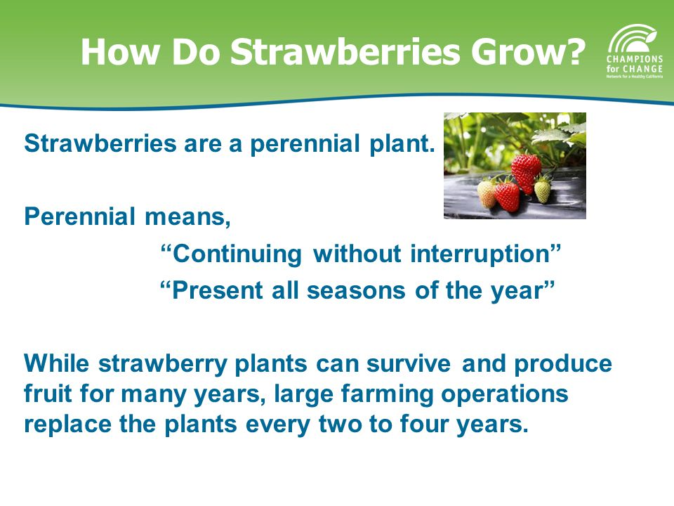 Home Grown Facts There are four main growing regions for strawberries in California, each with different growing periods.