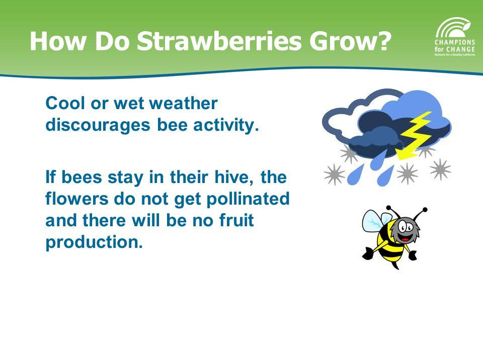 How Do Strawberries Grow.