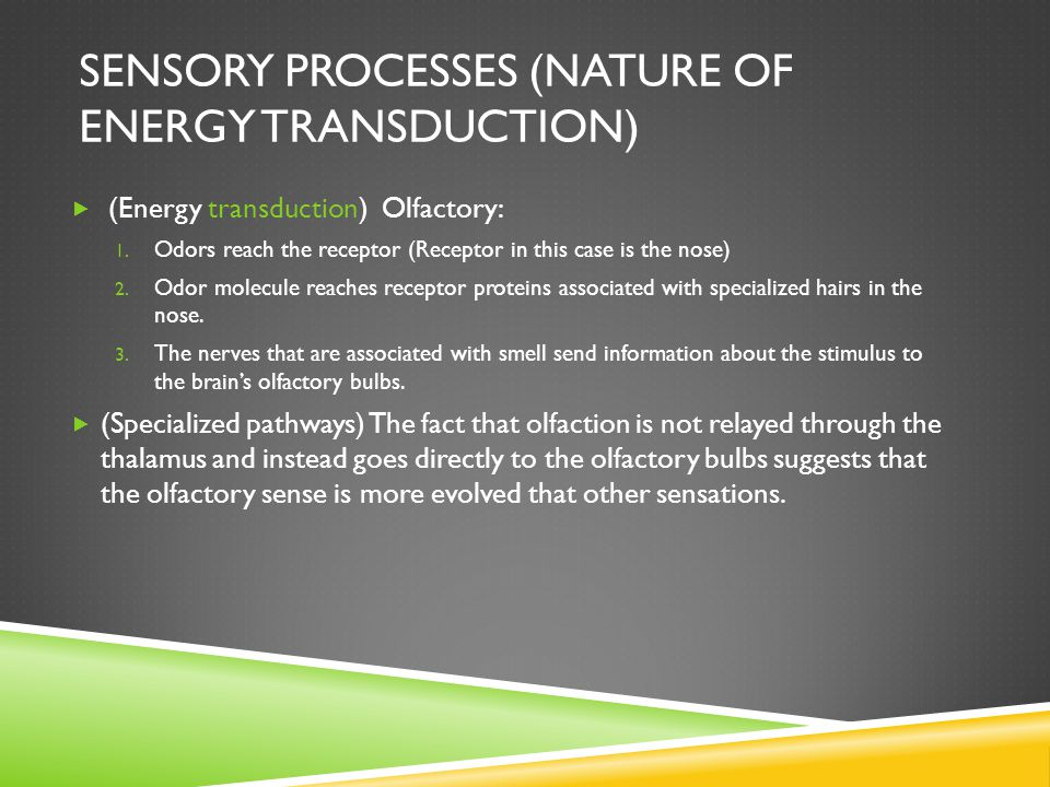 SENSORY PROCESSES (NATURE OF ENERGY TRANSDUCTION)  (Energy transduction) Olfactory: 1.