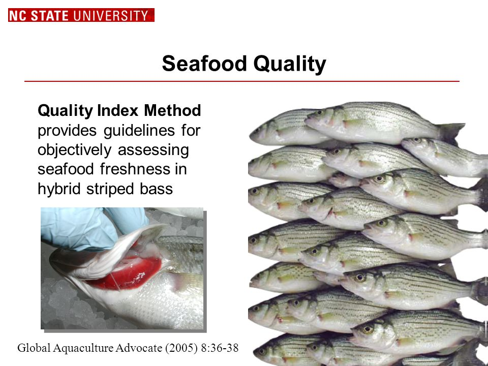 Seafood Quality Quality Index Method provides guidelines for objectively assessing seafood freshness in hybrid striped bass Global Aquaculture Advocate (2005) 8:36-38