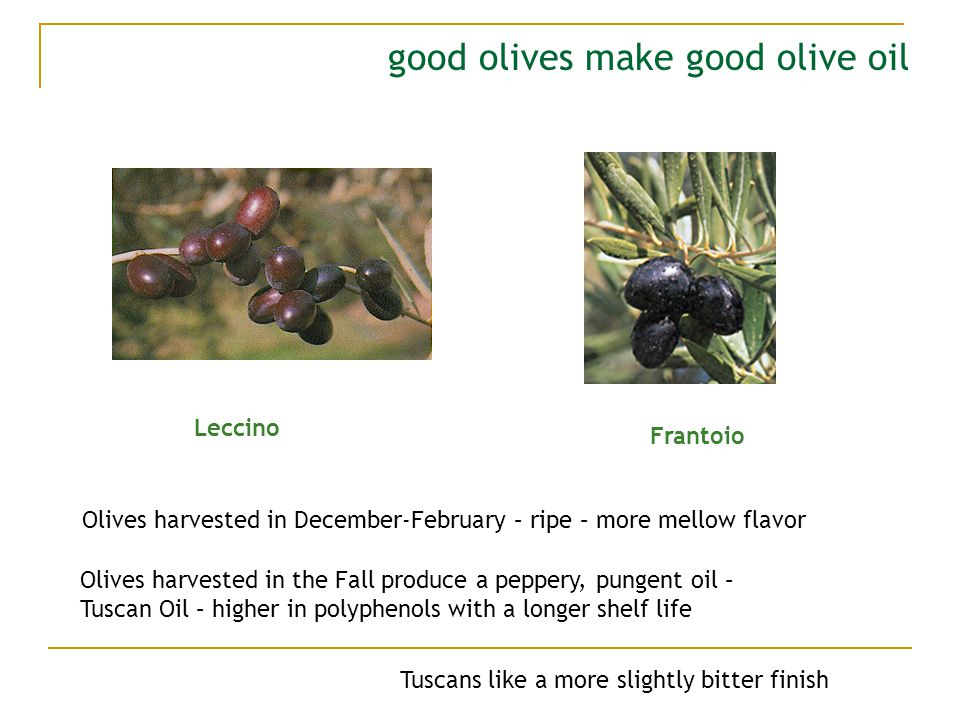 good olives make good olive oil Leccino Frantoio Olives harvested in the Fall produce a peppery, pungent oil – Tuscan Oil – higher in polyphenols with a longer shelf life Olives harvested in December-February – ripe – more mellow flavor Tuscans like a more slightly bitter finish