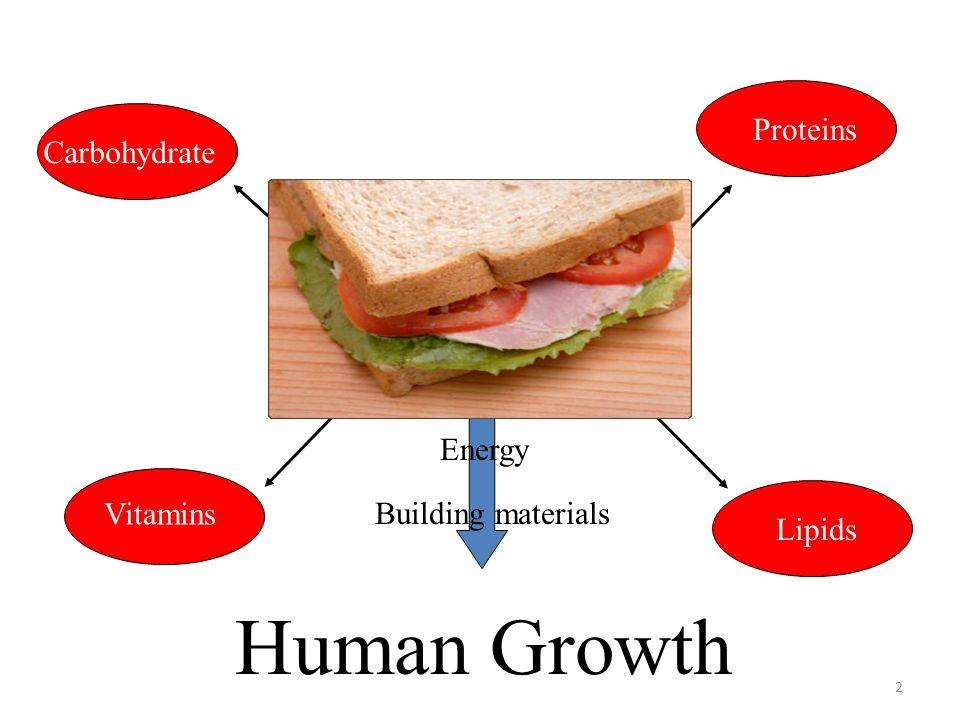 General pattern of microbial spoilage (Dalgaard, 1993) 33