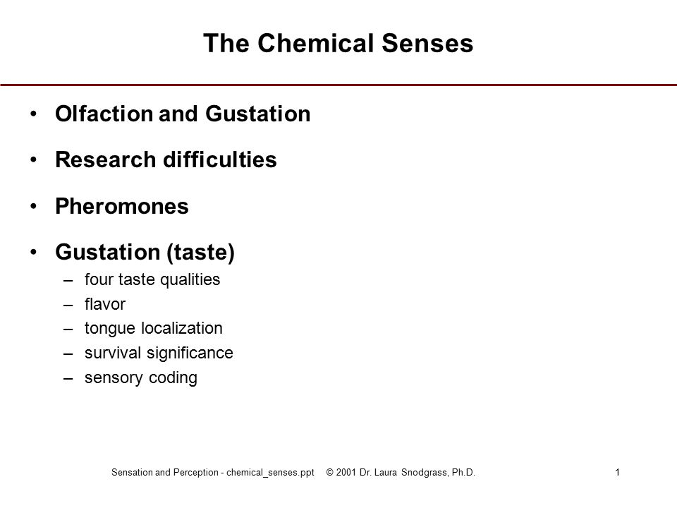 Sensation and Perception - chemical_senses.ppt © 2001 Dr. Laura Snodgrass, Ph.D.1 The Chemical Senses Olfaction and Gustation Research difficulties Ph