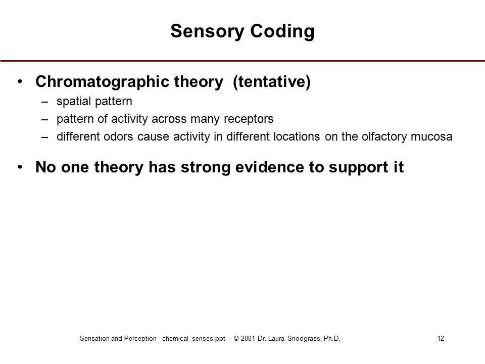 Sensation and Perception - chemical_senses.ppt © 2001 Dr. Laura Snodgrass, Ph.D.12 Sensory Coding Chromatographic theory (tentative) –spatial pattern