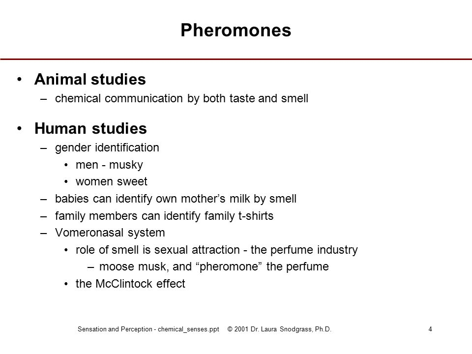 Sensation and Perception - chemical_senses.ppt © 2001 Dr. Laura Snodgrass, Ph.D.4 Pheromones Animal studies –chemical communication by both taste and