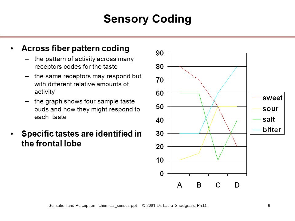 Sensation and Perception - chemical_senses.ppt © 2001 Dr. Laura Snodgrass, Ph.D.8 Sensory Coding Across fiber pattern coding –the pattern of activity