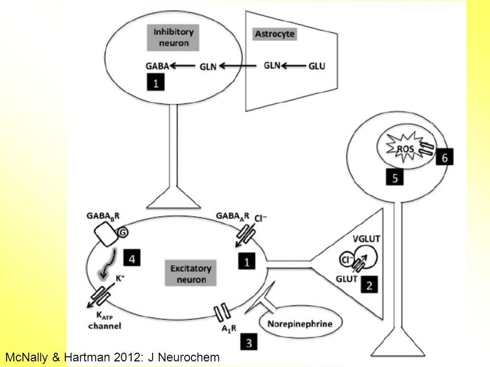 McNally & Hartman 2012: J Neurochem