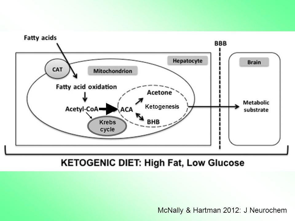 McNally & Hartman 2012: J Neurochem Krebs cycle Ketogenesis