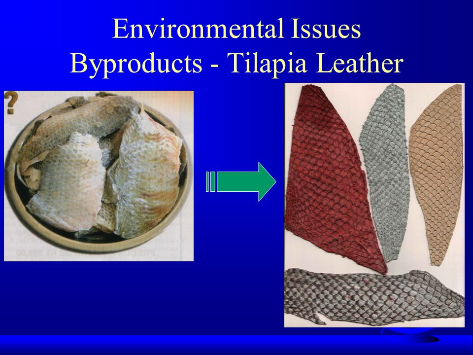 Environmental Issues Byproducts - Tilapia Leather