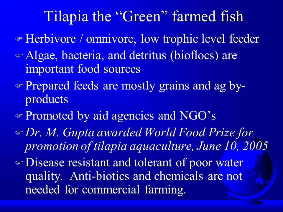 "Tilapia the ""Green"" farmed fish F Herbivore / omnivore, low trophic level feeder F Algae, bacteria, and detritus (bioflocs) are important food sources"