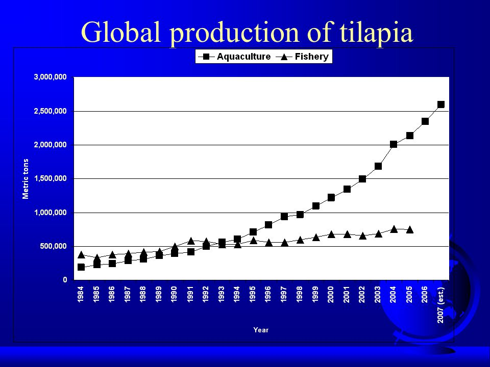 Global production of tilapia