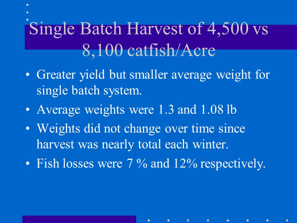 Single Batch Harvest of 4,500 vs 8,100 catfish/Acre Greater yield but smaller average weight for single batch system.