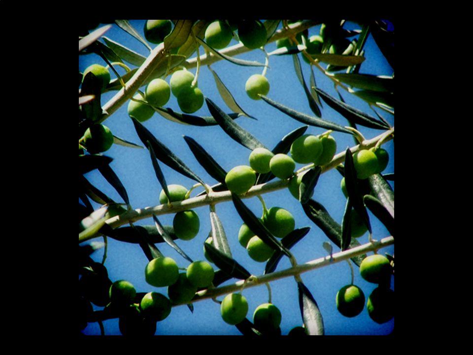 (olive #3)