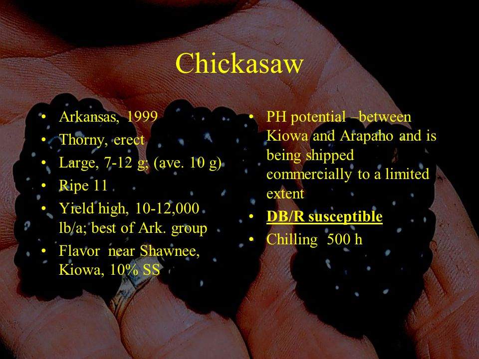 Chickasaw Arkansas, 1999 Thorny, erect Large, 7-12 g; (ave.