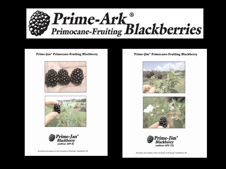 Prime-Jim® and Prime-Jan® Thorny, erect Medium, 5-6 g Floricane crop ripe 5-10 June Primocane crop late July until frost?.