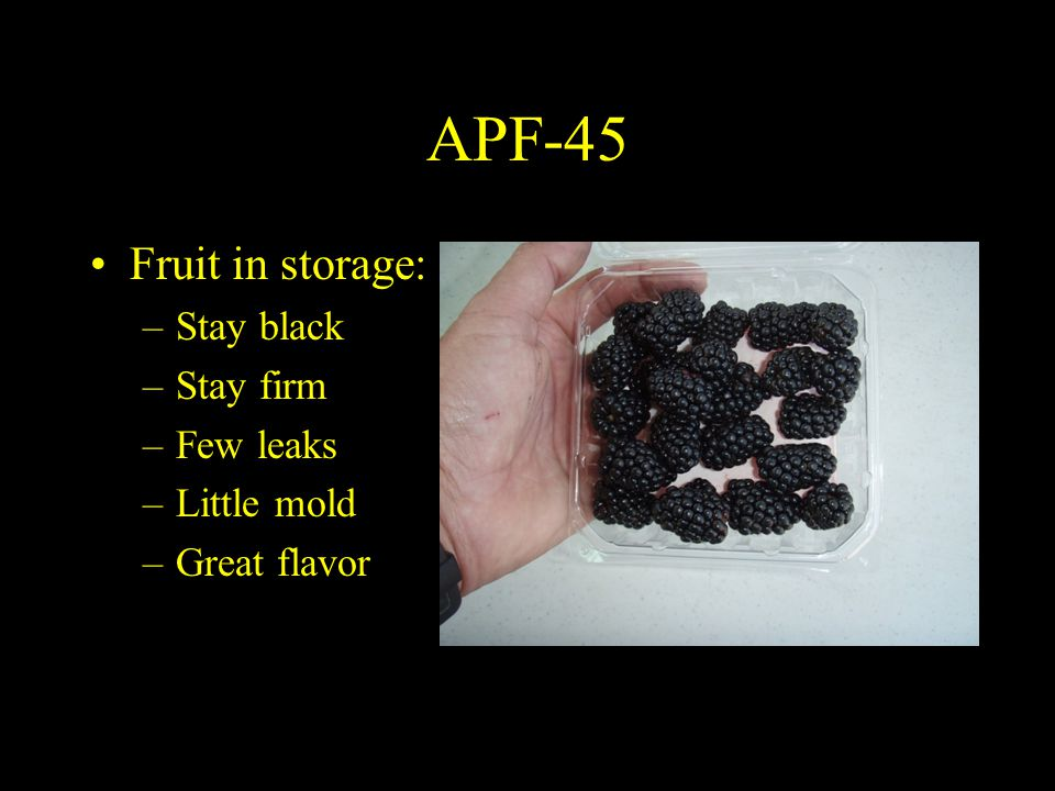 APF-45 Fruit in storage: –Stay black –Stay firm –Few leaks –Little mold –Great flavor