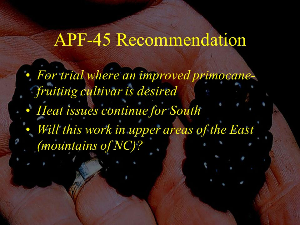 APF-45 Recommendation For trial where an improved primocane- fruiting cultivar is desired Heat issues continue for South Will this work in upper areas of the East (mountains of NC)