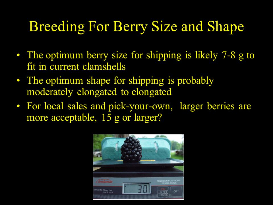 Breeding For Berry Size and Shape The optimum berry size for shipping is likely 7-8 g to fit in current clamshells The optimum shape for shipping is probably moderately elongated to elongated For local sales and pick-your-own, larger berries are more acceptable, 15 g or larger