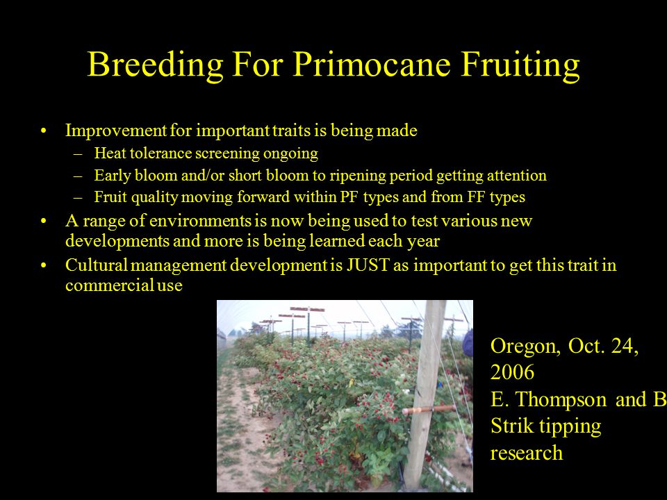Breeding For Primocane Fruiting Improvement for important traits is being made –Heat tolerance screening ongoing –Early bloom and/or short bloom to ripening period getting attention –Fruit quality moving forward within PF types and from FF types A range of environments is now being used to test various new developments and more is being learned each year Cultural management development is JUST as important to get this trait in commercial use Oregon, Oct.