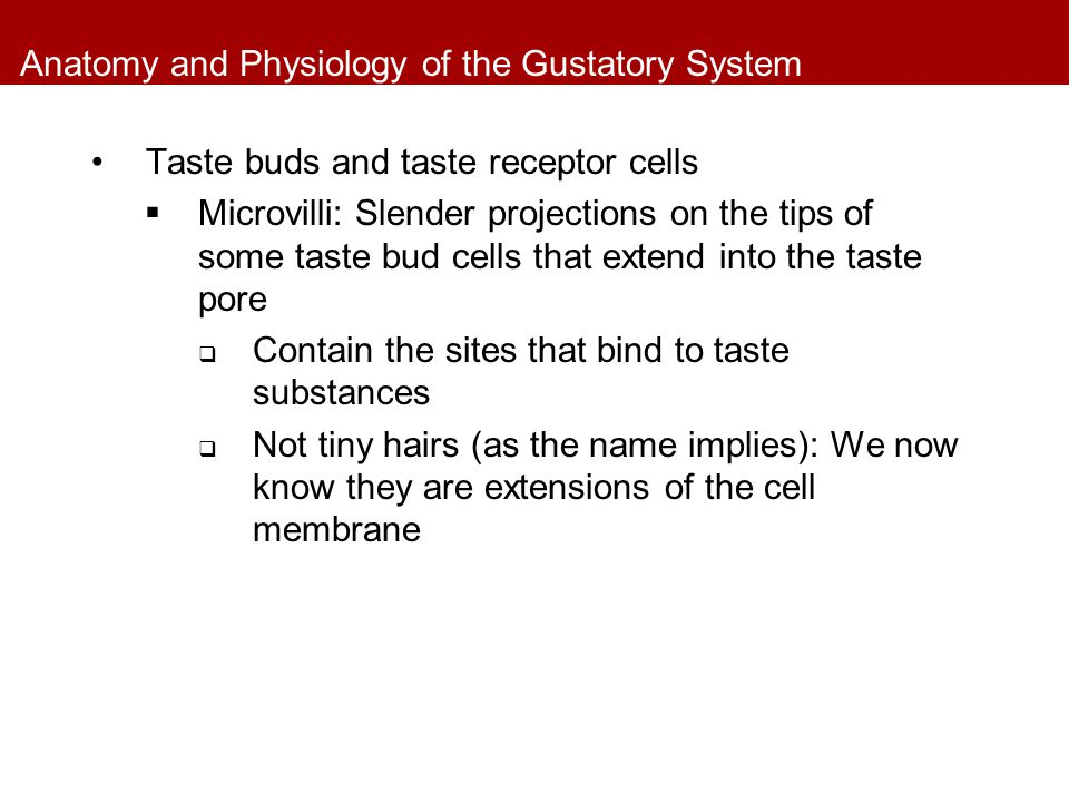 Anatomy and Physiology of the Gustatory System Taste buds and taste receptor cells  Microvilli: Slender projections on the tips of some taste bud cel