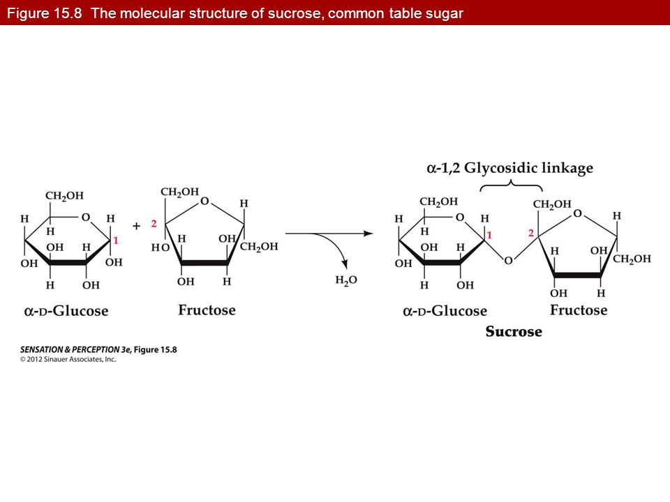 Figure 15.8 The molecular structure of sucrose, common table sugar