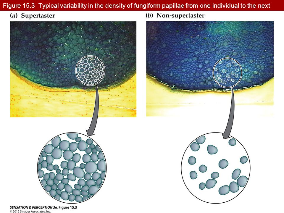 Figure 15.3 Typical variability in the density of fungiform papillae from one individual to the next