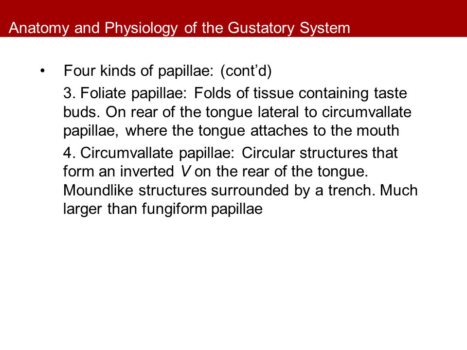 Anatomy and Physiology of the Gustatory System Four kinds of papillae: (cont'd) 3. Foliate papillae: Folds of tissue containing taste buds. On rear of