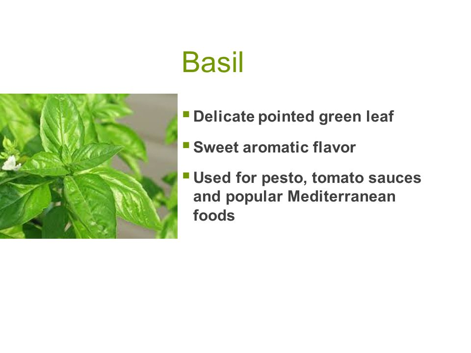 Basil  Delicate pointed green leaf  Sweet aromatic flavor  Used for pesto, tomato sauces and popular Mediterranean foods