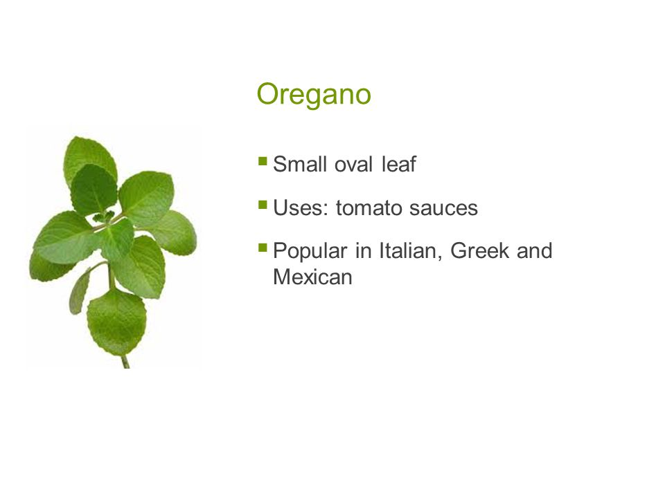 Oregano  Small oval leaf  Uses: tomato sauces  Popular in Italian, Greek and Mexican