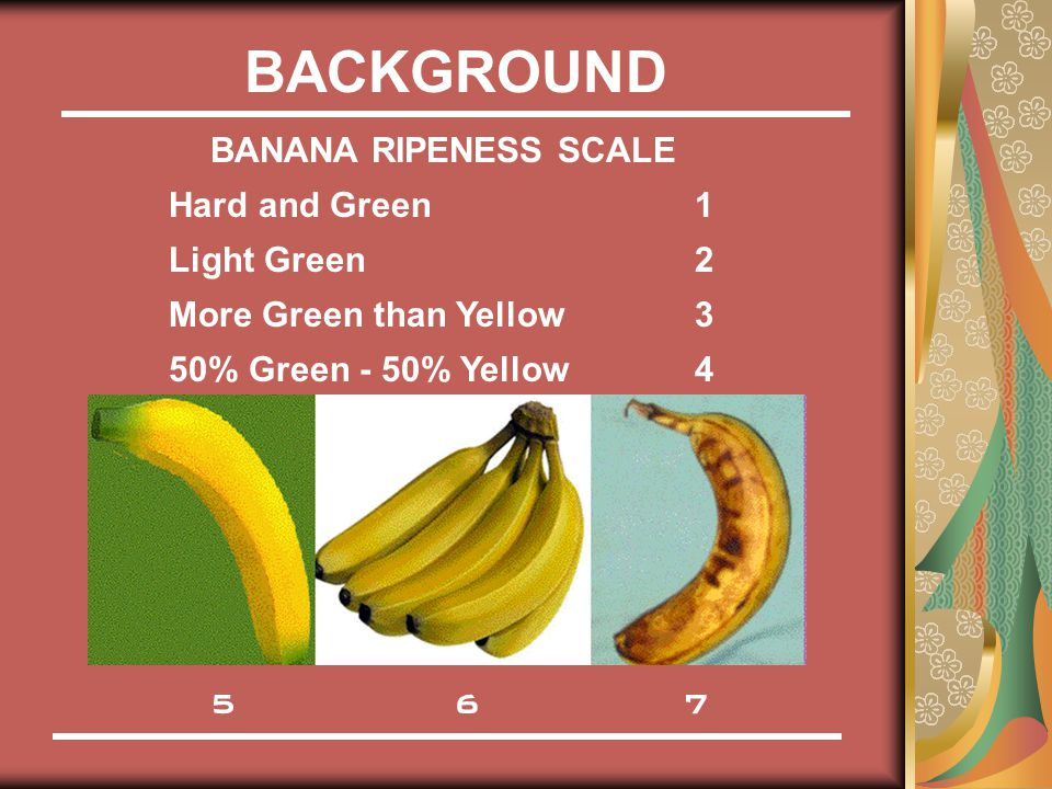 BACKGROUND BANANA RIPENESS SCALE Hard and Green1 Light Green2 More Green than Yellow3 50% Green - 50% Yellow4 5 6 7