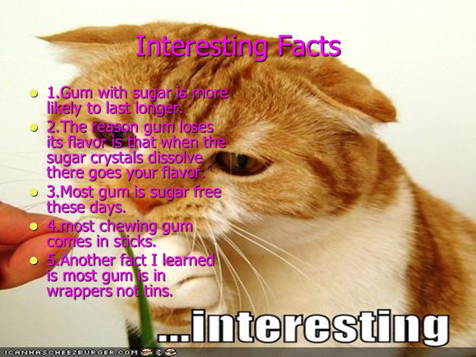 Interesting Facts 1.Gum with sugar is more likely to last longer. 1.Gum with sugar is more likely to last longer. 2.The reason gum loses its flavor is