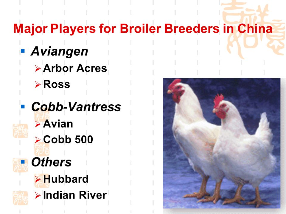 Major Players for Broiler Breeders in China  Aviangen  Arbor Acres  Ross  Cobb-Vantress  Avian  Cobb 500  Others  Hubbard  Indian River